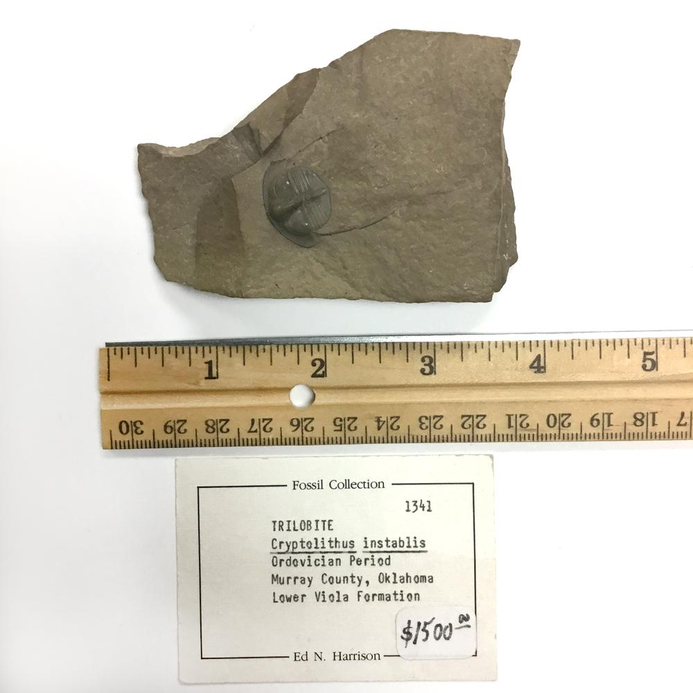 Trilobite (1341)