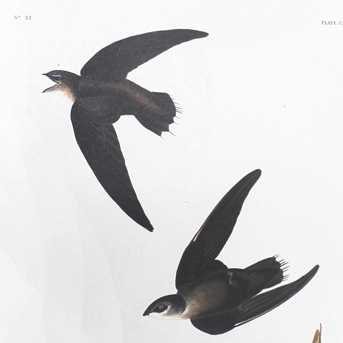 American Swift (CLVIII)