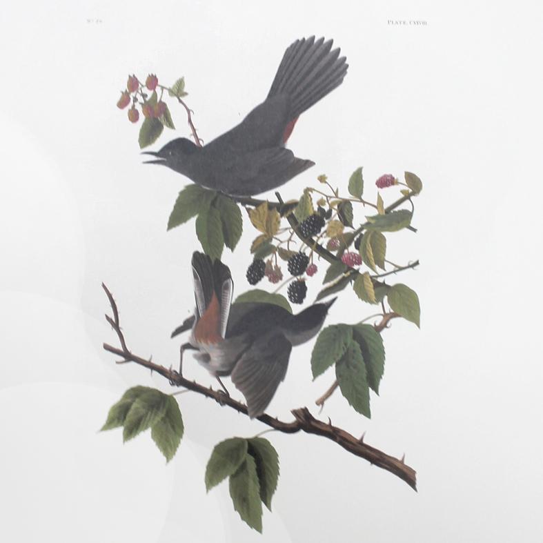 Cat Bird (CXXVIII)