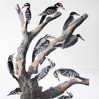 Ten Woodpeckers (CCCCXVII)