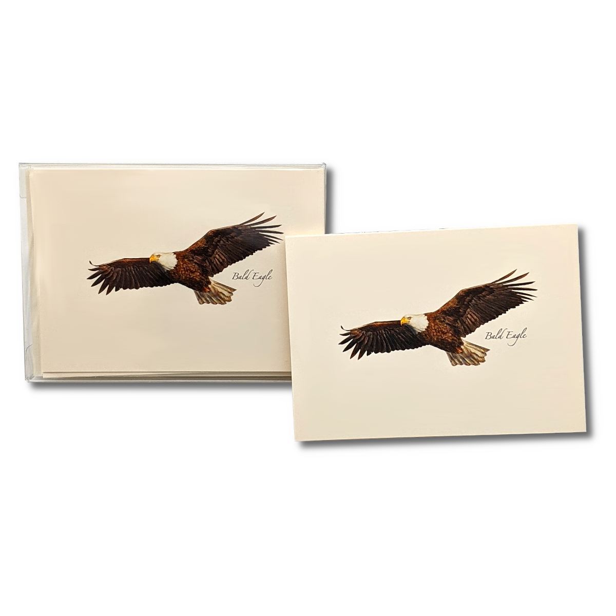 Earth Sky + Water - Bald Eagle Boxed Notes