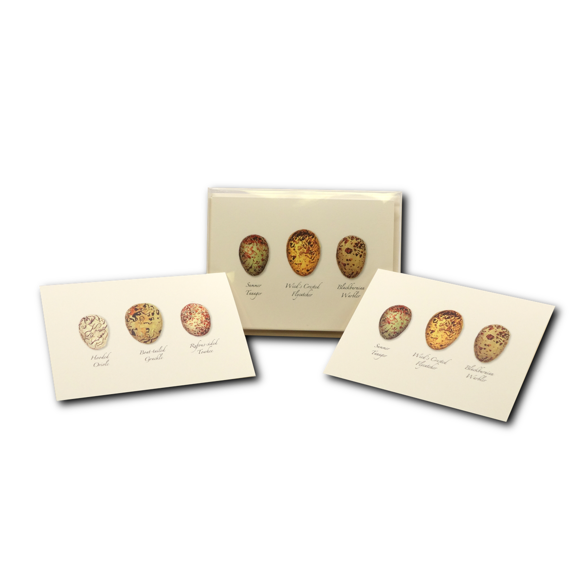 Earth Sky + Water - Bird Egg Assortment Boxed Notes