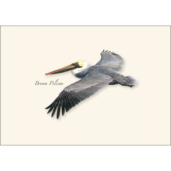 Earth Sky + Water -  Brown Pelican in Flight Boxed Notes