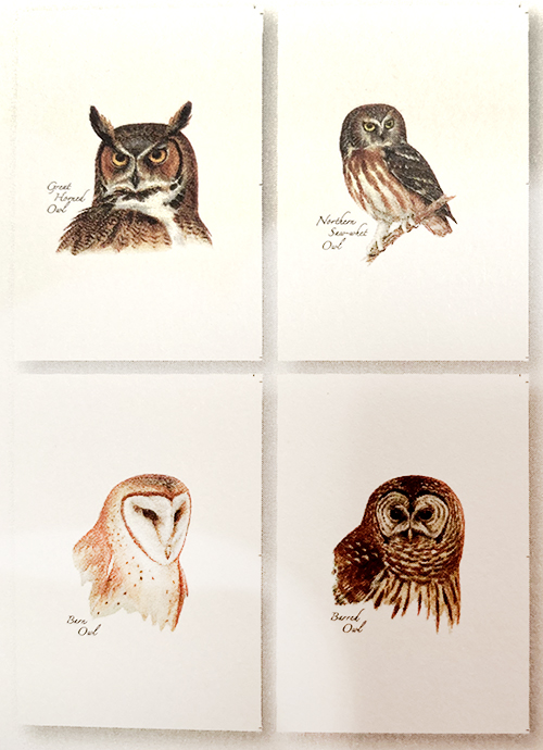 Blank Note Cards with Envelopes (Set of 8)