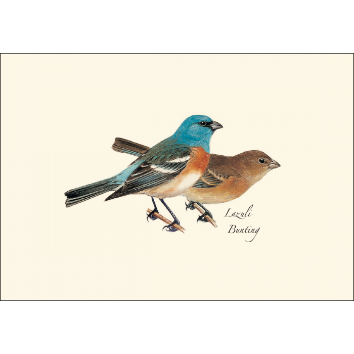Earth Sky + Water - Peterson Western Bird Boxed Note Assortment