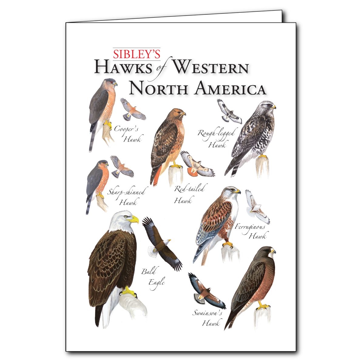Earth Sky + Water - Sibley's Hawks of Western North America Blank Card