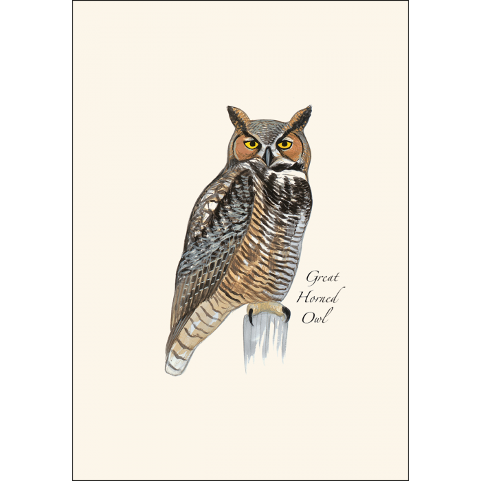 Earth Sky + Water - Sibley Owl Assortment Boxed Notes