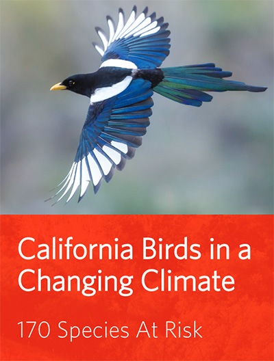 birds changing climate