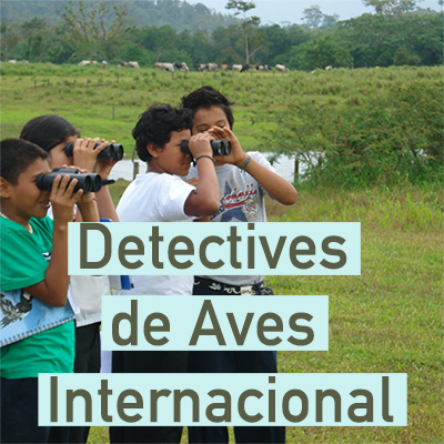 deterctives aves