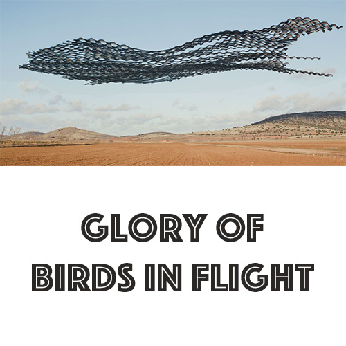 glory of birds