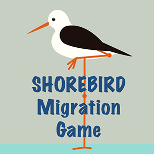 shorebird game