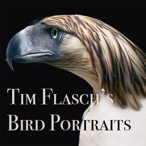 tim flasch bird portraits