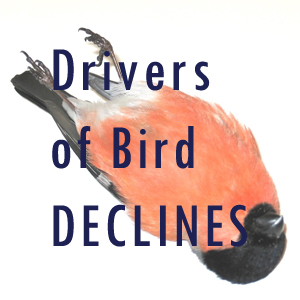 birddecline button
