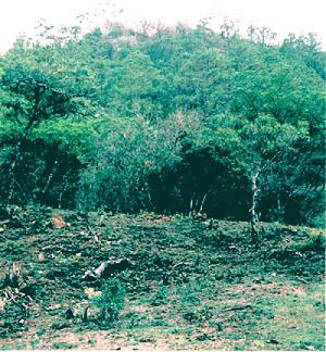 A chunk of the forest has been cleared for grazing